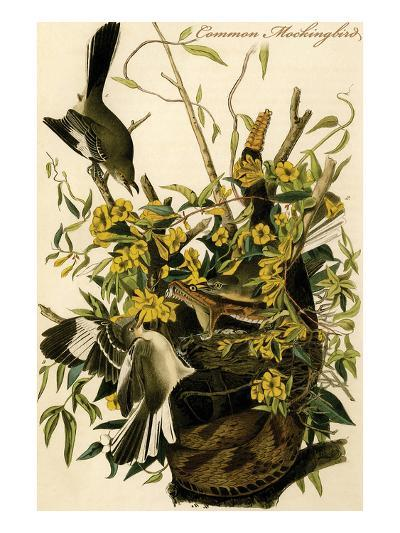 Common Mockingbird-John James Audubon-Art Print