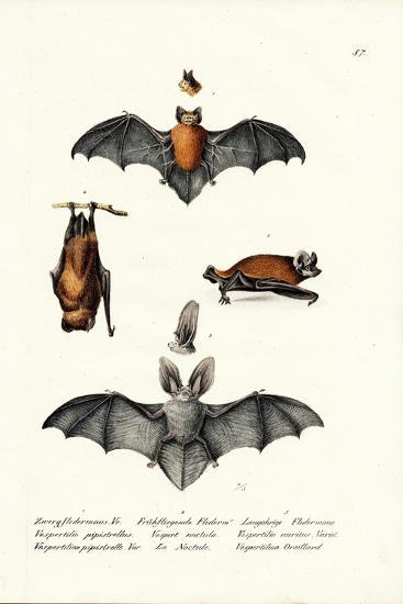 Common Pipistrelle, 1824-Karl Joseph Brodtmann-Giclee Print