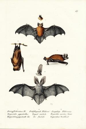 https://imgc.artprintimages.com/img/print/common-pipistrelle-1824_u-l-puq69g0.jpg?p=0