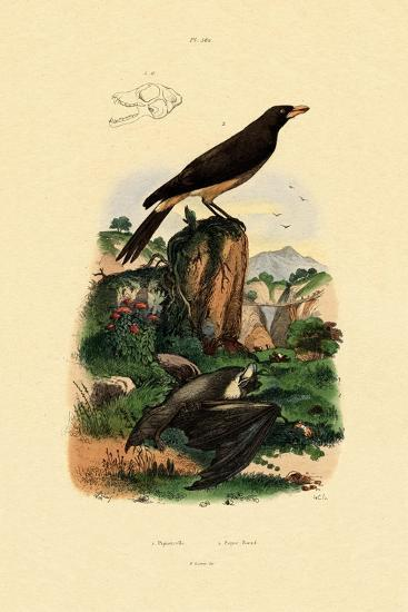 Common Pipistrelle, 1833-39--Giclee Print