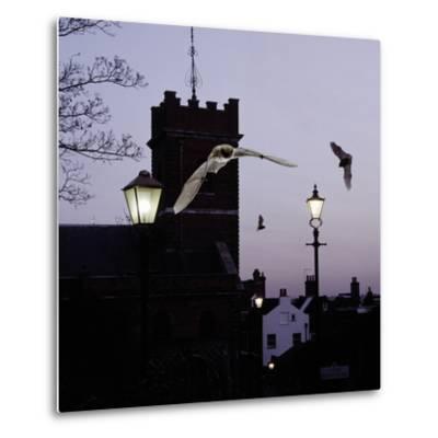 Common Pipistrelles (Pipistrellus Pipistrellus) Flying Round Church Tower. UK. Digital Composite