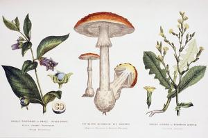Common Poisonous Plants, C.1890
