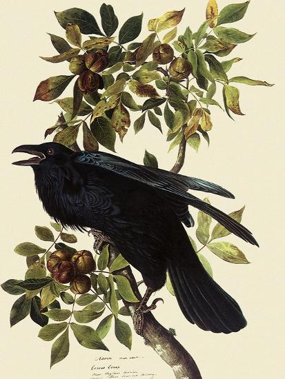 Common Raven-John James Audubon-Giclee Print