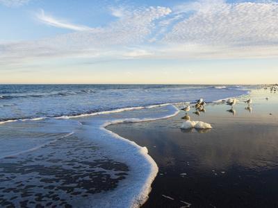 Common Sea Gulls and Surf-Mauricio Handler-Photographic Print
