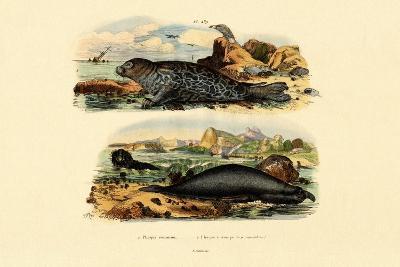 Common Seal, 1833-39--Giclee Print