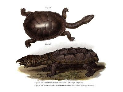Common Snake-Necked Turtle--Giclee Print