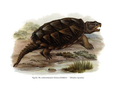 Common Snapping Turtle--Giclee Print