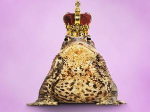 Common Toad 'Frog Prince' Wearing Crown