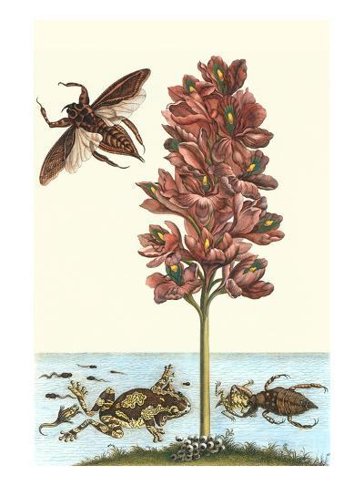 Common Water Hyacinth with a Veined Tree Frog and a Giant Water Bug-Maria Sibylla Merian-Art Print