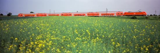 Commuter Train Passing Through Oilseed Rape Fields, Baden-Wurttemberg, Germany--Photographic Print