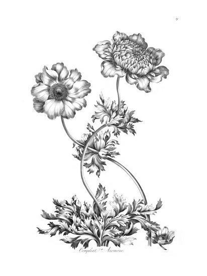 Complete Anemone-Porter Design-Premium Giclee Print
