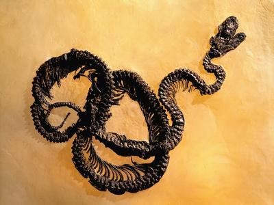 https://imgc.artprintimages.com/img/print/complete-fossil-of-large-snake_u-l-pzlsmc0.jpg?p=0