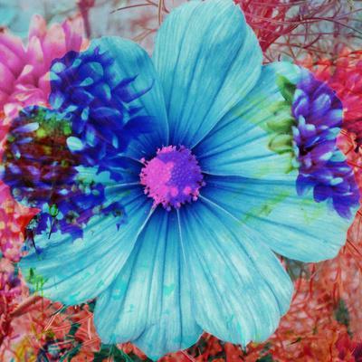 https://imgc.artprintimages.com/img/print/composing-with-blue-flowers_u-l-q11z7ki0.jpg?p=0