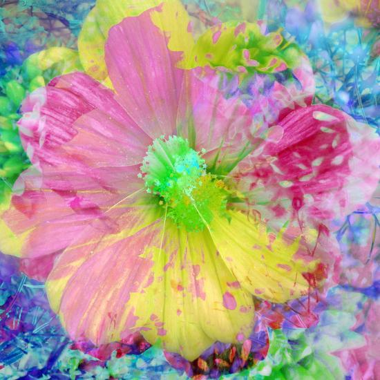 Composing with Coloured Blossoms-Alaya Gadeh-Photographic Print
