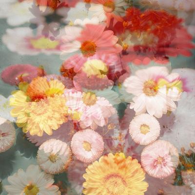 https://imgc.artprintimages.com/img/print/composing-with-coloured-blossoms_u-l-q11z8pc0.jpg?p=0