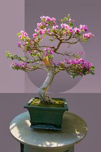 Composite image of Japanese bonsai tree in front of a geometric Asian pattern