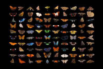 https://imgc.artprintimages.com/img/print/composite-of-one-hundred-different-species-of-butterflies-and-moths_u-l-q1dc0ui0.jpg?p=0