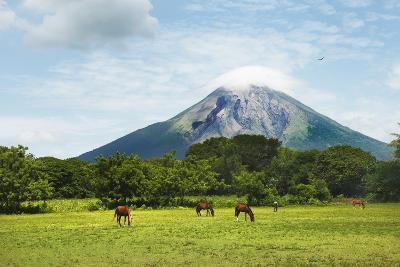 Concepcion Volcano with Grazing Horses-Paul Taylor-Photographic Print