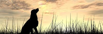 Concept or Conceptual Young Beautiful Black Cute Dog Silhouette in Grass or Meadow over a Sky at Su-bestdesign36-Photographic Print