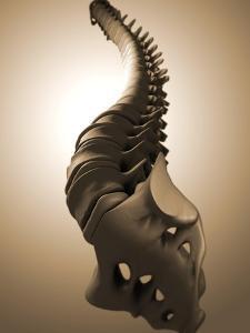 Conceptual Image of Human Backbone