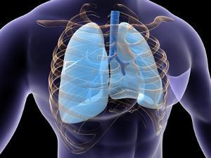 Conceptual Image of Human Lungs and Rib Cage
