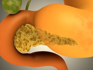 Conceptual Image of Human Pancreas and Stomach