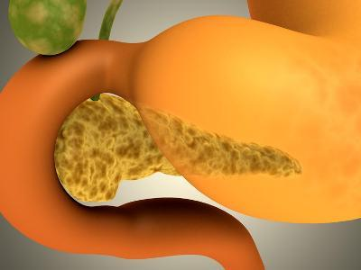 Conceptual Image of Human Pancreas and Stomach--Art Print