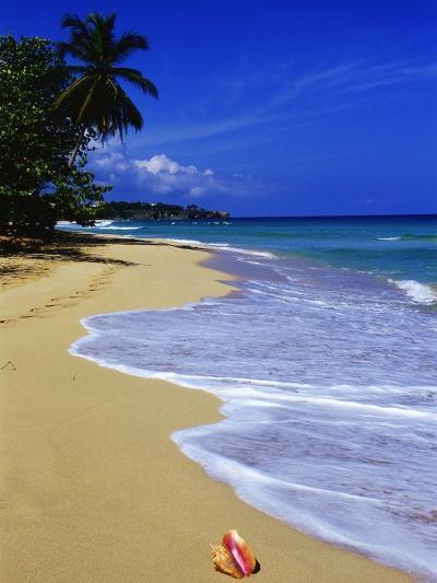 Conch Shell on Playa Grande Beach-Danny Lehman-Photographic Print
