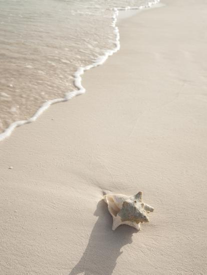 Conch Shell Washed Up on Grace Bay Beach, Providenciales, Turks and Caicos Islands, West Indies-Kim Walker-Photographic Print