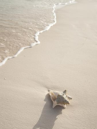 https://imgc.artprintimages.com/img/print/conch-shell-washed-up-on-grace-bay-beach-providenciales-turks-and-caicos-islands-west-indies_u-l-pxwdn80.jpg?p=0