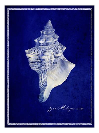 Conch Shell-GI ArtLab-Premium Photographic Print