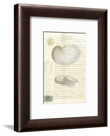 Conchology Sketch I-Stephanie Monahan-Framed Art Print