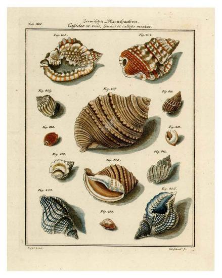 Conchylien Cabinet II-W^ Martini-Art Print