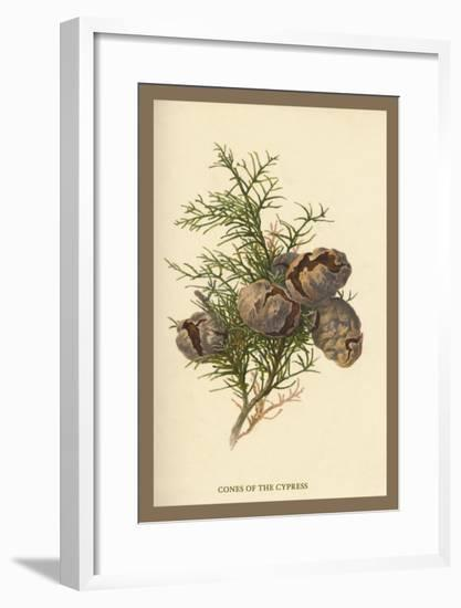 Cones of the Cypress-W.h.j. Boot-Framed Art Print