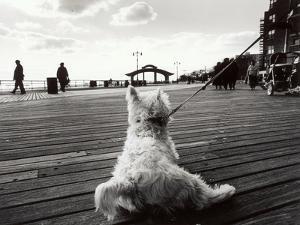 Coney Island Dog, NY, 2006