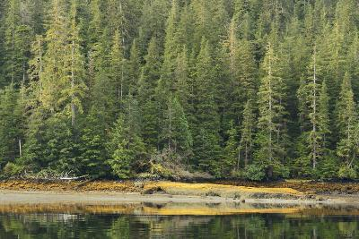 Conifer Trees Reflected in the Calm Waters of Rudyerd Bay-Jonathan Kingston-Photographic Print