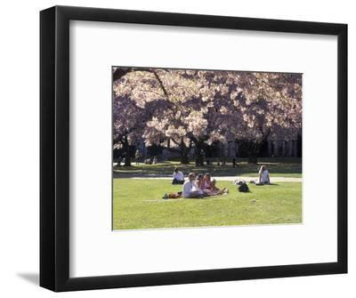 Cherry Blossoms and Trees in the Quad, University of Washington, Seattle, Washington, USA