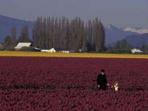 Skagit Valley Tulip Festival in April, Washington, USA by Connie Ricca