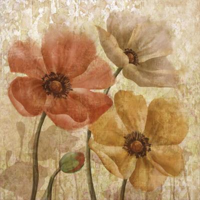 Poppy Allure I
