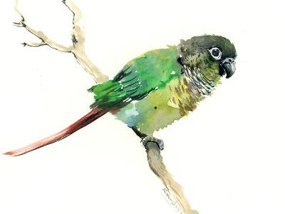 Conure Parakeet Parrot-Suren Nersisyan-Art Print
