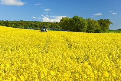 Conventional Agriculture, Farmer Spreading Pesticides on the Rape Field by Tractor-Andreas Vitting-Photographic Print