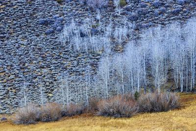 Conway Summit Along Highway 395 In The Eastern Sierras Northern California Near Mono Lake-Jay Goodrich-Photographic Print