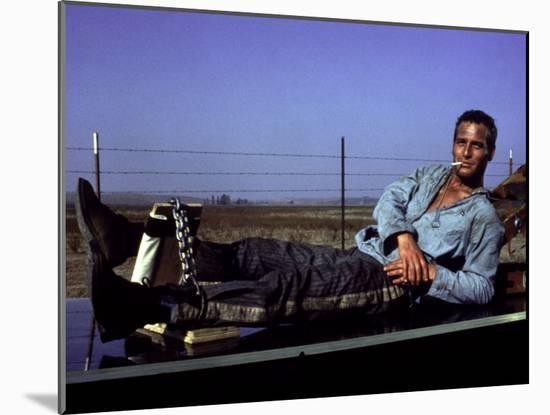 Cool Hand Luke, Paul Newman, 1967, Leg Irons--Mounted Photo