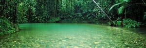 Cooper Creek Flowing Through a Forest, Cape Tribulation, Daintree River, Queensland, Australia