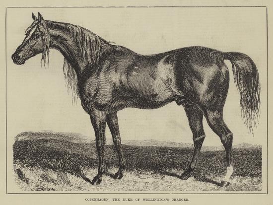 Copenhagen, the Duke of Wellington's Charger--Giclee Print