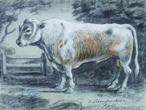 Leicestershire Bull, 18th Century by Copleston Warre Bampfylde