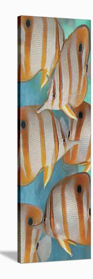 Copper Banded Butterfly-Melinda Bradshaw-Stretched Canvas Print