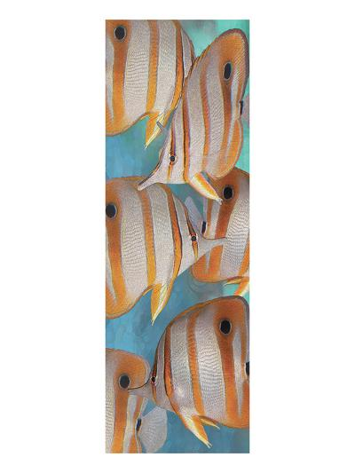 Copper Banded Butterfly-Melinda Bradshaw-Art Print