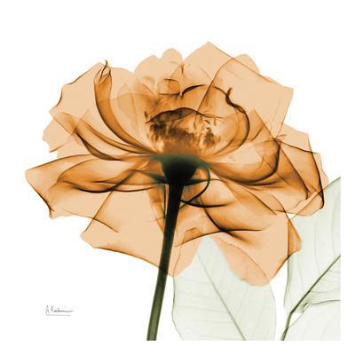 https://imgc.artprintimages.com/img/print/copper-rose_u-l-f5q3120.jpg?p=0