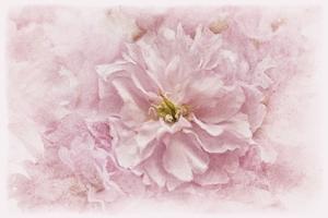 Cherry Blossom by Cora Niele